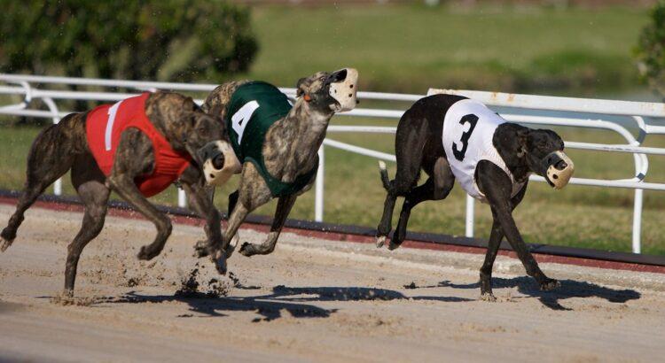 Bahisnow Köpek Yarışı Tutturma Taktikleri